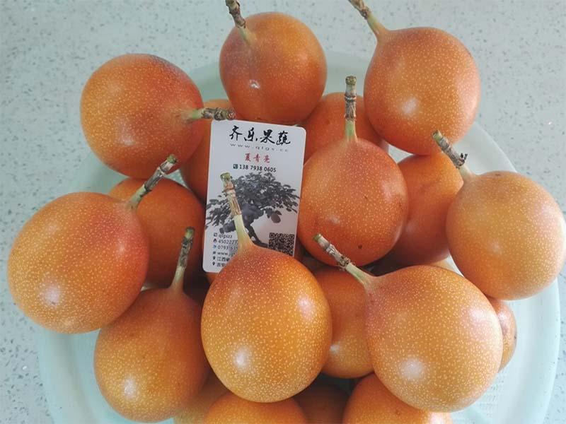 黄金百香果多少钱-江西口碑好的黄金百香果生产基地