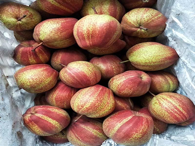 江苏红酥梨价位|齐乐果蔬销量好的红酥梨出售