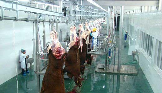 屠宰流水線-安成食品機械提供具有口碑的屠宰流水線