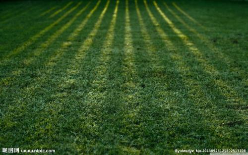 铁岭草坪|辽宁绿化草坪绿之源苗木草坪基地