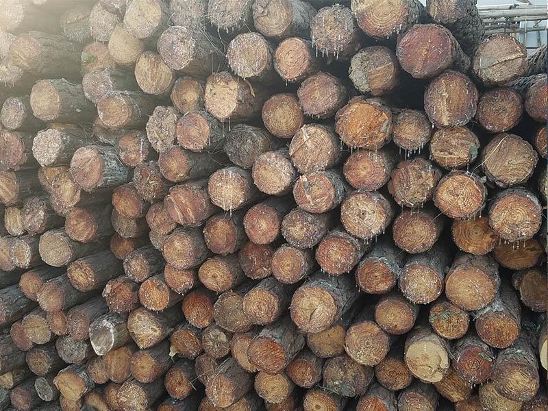 内销松木桩-佛山质量硬的松木桩
