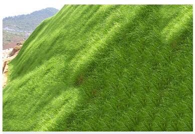 河北哪找生态防护毯平价供应商_-健林边坡生态防护毯订做