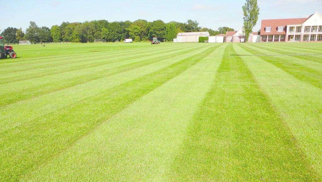铁岭草坪绿化-想买品种好的草坪上哪