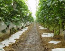 优质葡萄专用膜-淄博葡萄专用膜供应价格