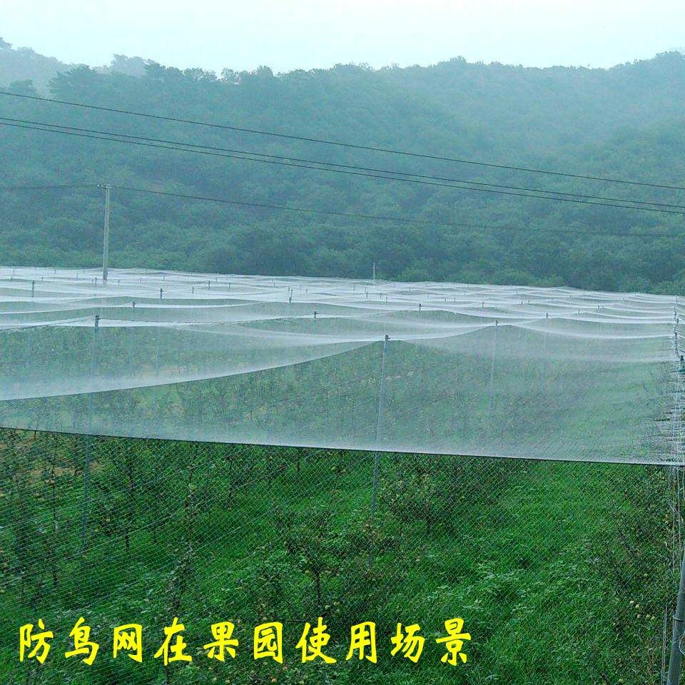 河南防鸟网供应商哪家好_郑州葡萄防鸟网价格如何