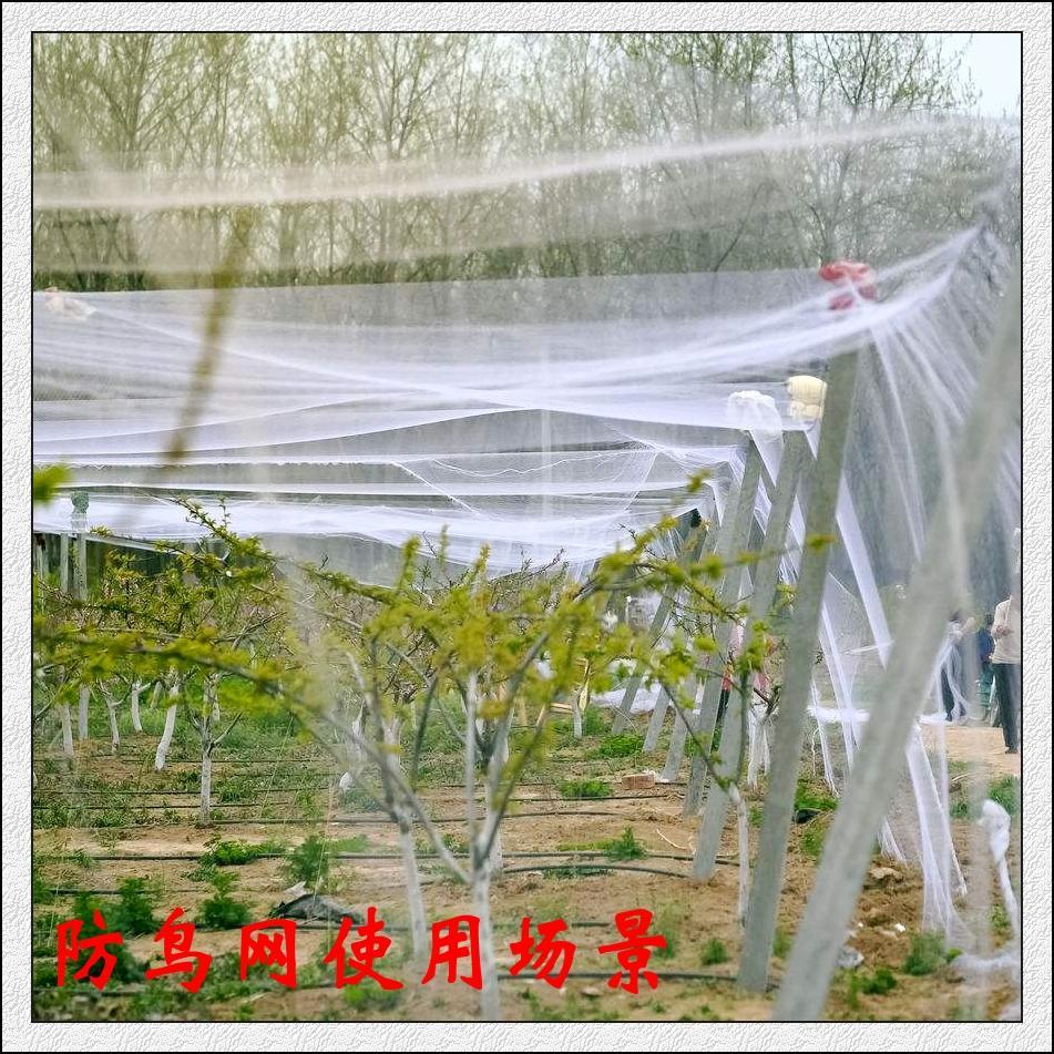 郑州防鸟网哪里有供应-专业的葡萄防鸟网