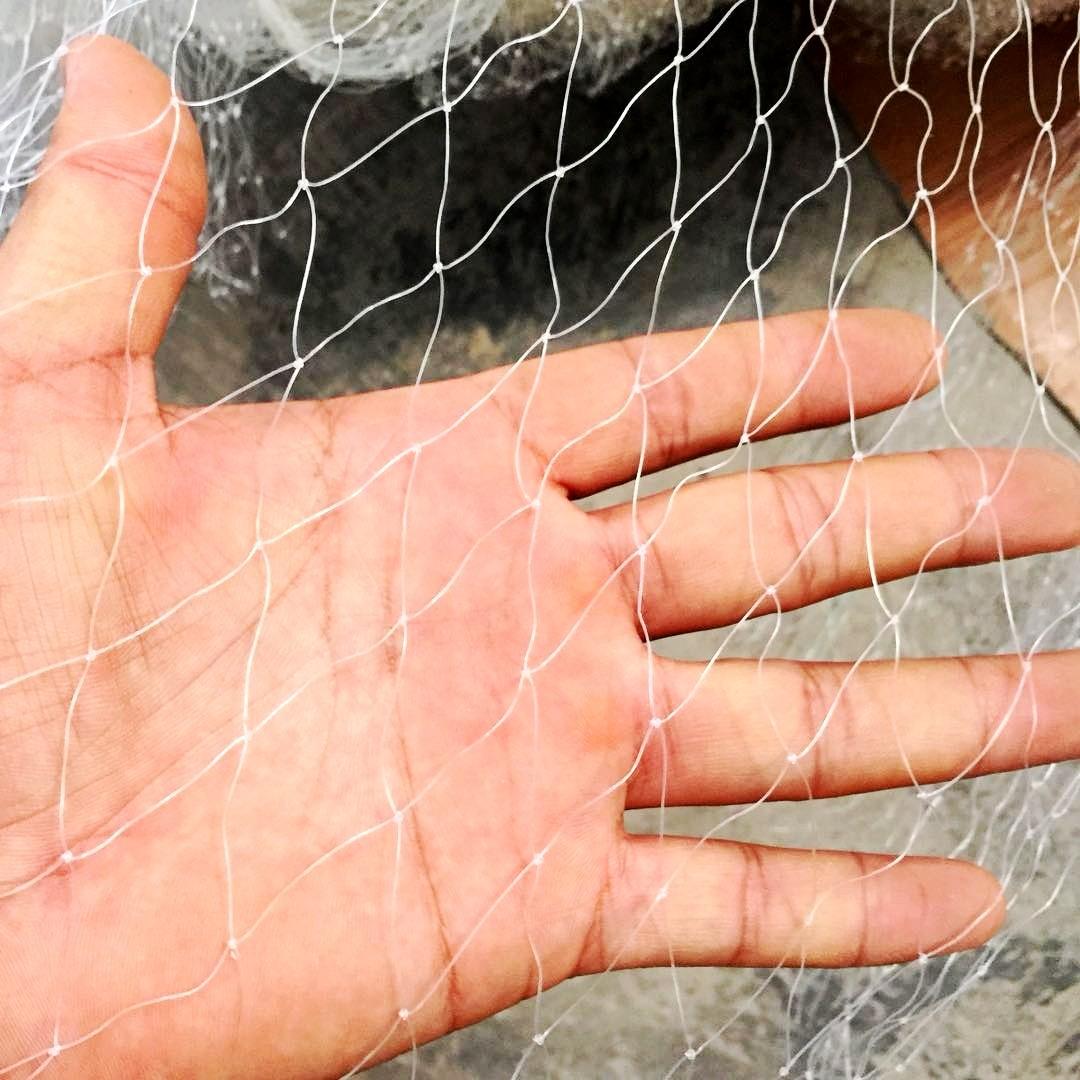 防鳥網批發廠家-為您推薦質量好的防鳥網