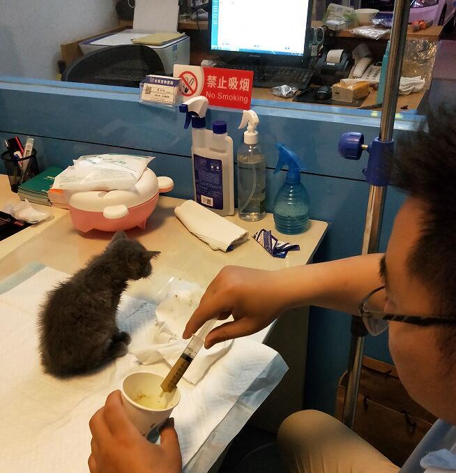 宠物疫苗临沂优萌宠物专业供应,临沂宠物医院价格范围