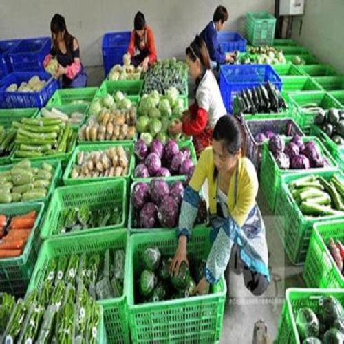 蔬菜粮油配送哪里有_广东蔬菜粮油配送公司推荐