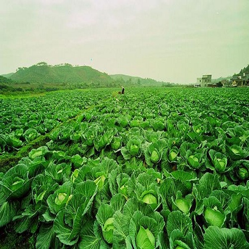 找蔬菜粮油配送就来盛佳康农副产品有限公司-安全蔬菜粮油配送引进