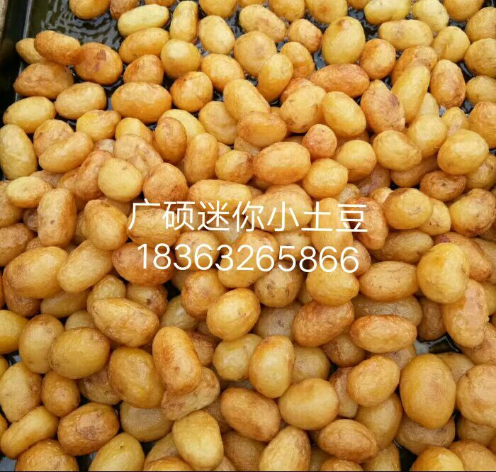 哪里有常年供应迷你小土豆厂家,神农架小土豆批发价格