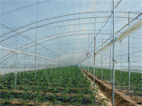 蔬菜大棚建设、蔬菜大棚建造厂家、蔬菜大棚建造成本、蔬菜大棚建
