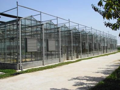 玻璃温室承接,玻璃温室工程当选凯尔农业科技