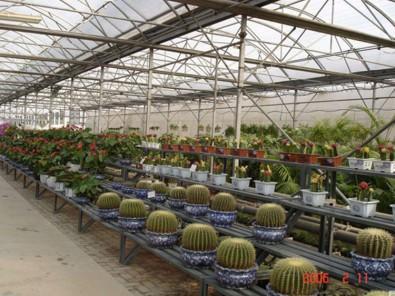 花卉温室——山东花卉温室供应