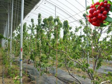 潍坊养殖温室造价怎样,养殖温室行情
