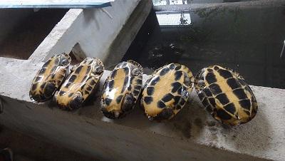 惠州赏龟服务_生态园哪里有-惠州市子山实业有限公司