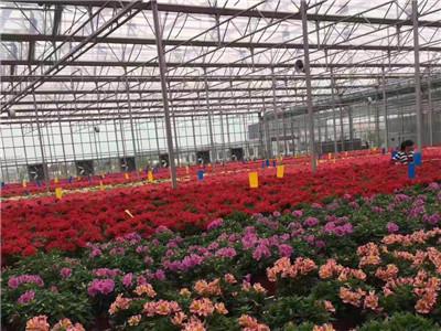 花卉温室-花卉温室认准春诚温室园艺