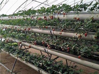 蔬菜温室设计-山东超值的蔬菜温室