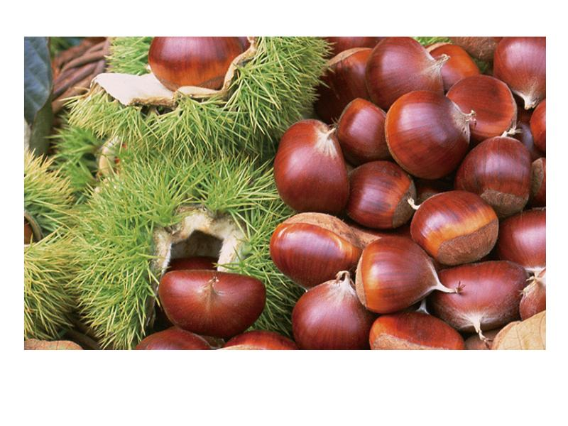 廣西水果批發-報價合理的板栗-康德果蔬供應
