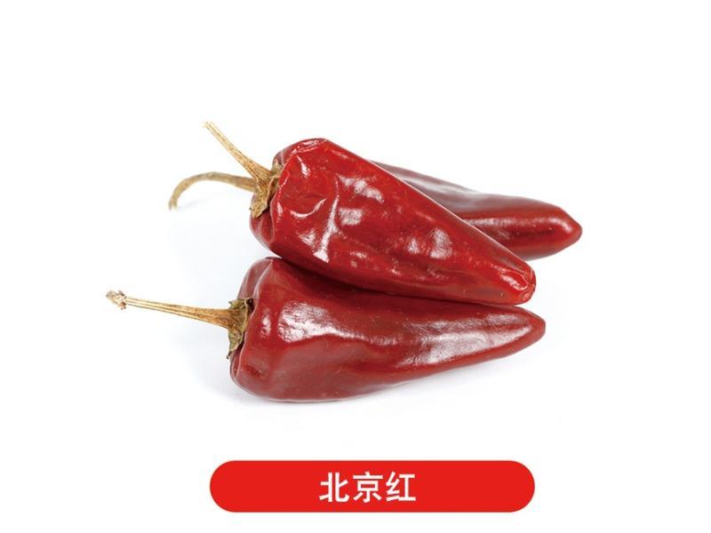 天津辣椒批发_济宁优惠的辣椒出售