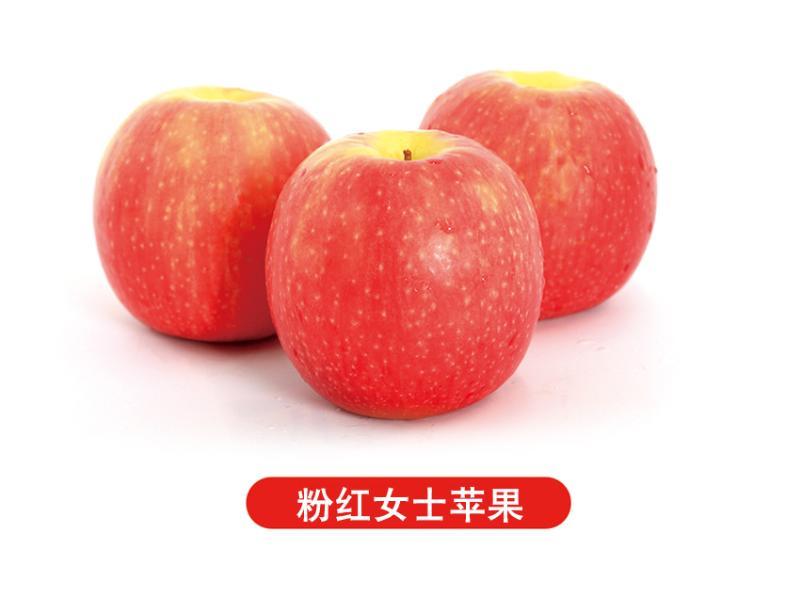 山东苹果果蔬加工|报价合理的苹果哪里有卖