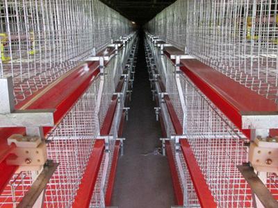 肉鸡笼养设备-潍坊价格合理的双层热镀锌肉鸡鸡笼哪里买