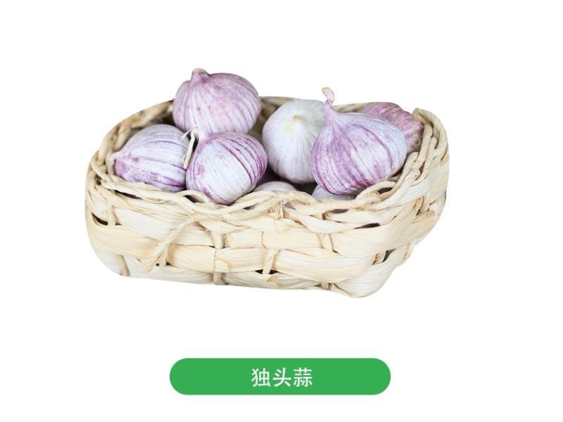 广东大蒜供应商_济宁大蒜专业供应