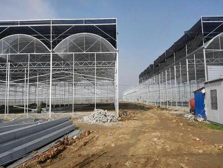连栋温室大棚建设价格认准丰源温室工程-连栋温室大棚建设价格