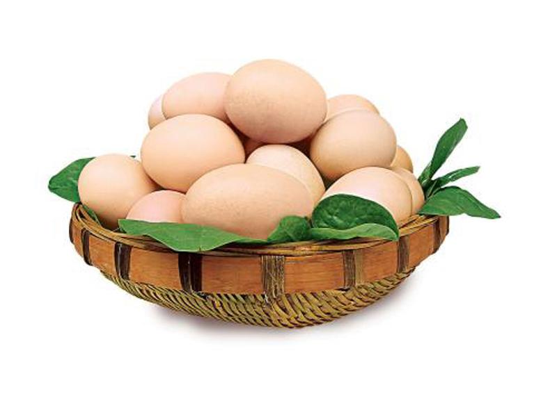 河南物超所值的粉皮鸡蛋供应-海南粉皮鸡蛋