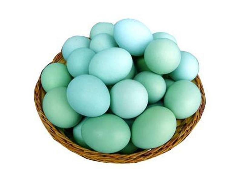 河南益隆_知名的笨鸡蛋供应商-重庆散养笨鸡蛋