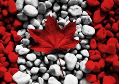 【烟台知名】加拿大签证 加拿大劳务派遣