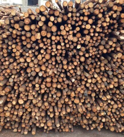 廊坊天津杉木杆,草炭土批发大量供应1米2米3米4米5米杉木杆