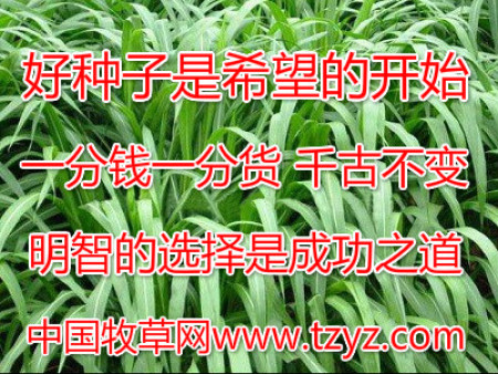 牧草种子质量检验,让你种出不一样的牧草!