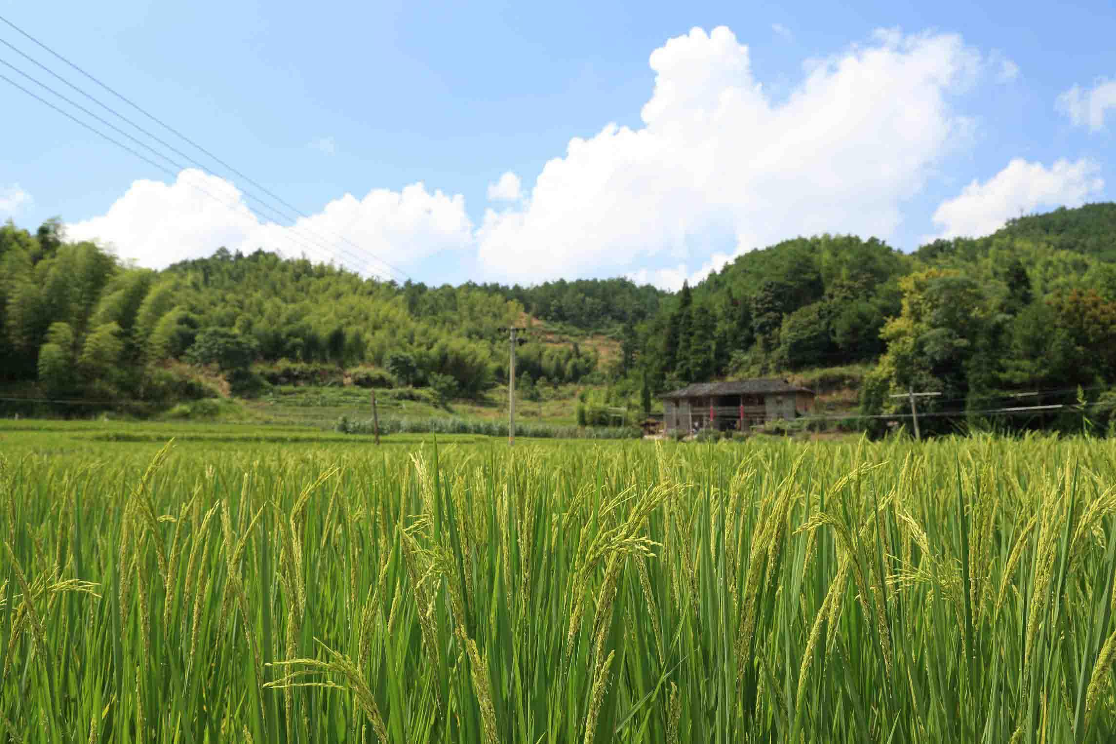 富硒大米价格咨询-富硒大米动态