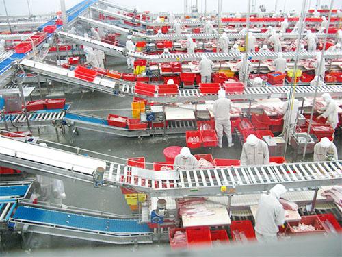 皮带式生产线-广东有品质的生产线供应