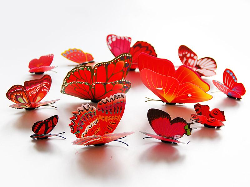 具有价值的五色系单层蝴蝶套装_温州知名五色系单层蝴蝶套装厂推荐