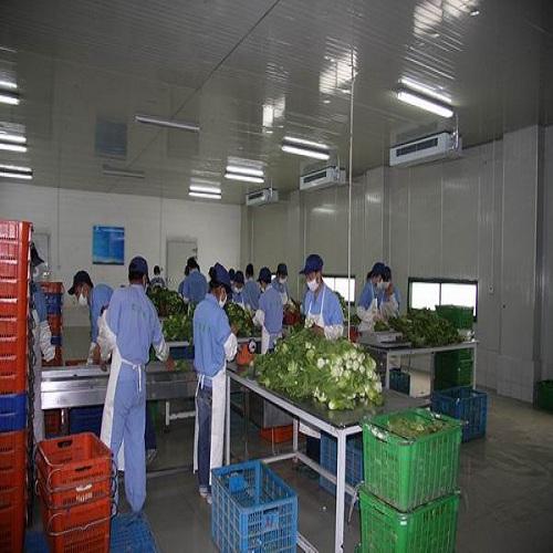 珠海地区好的源生蔬菜配送服务  -食材配送联系方式