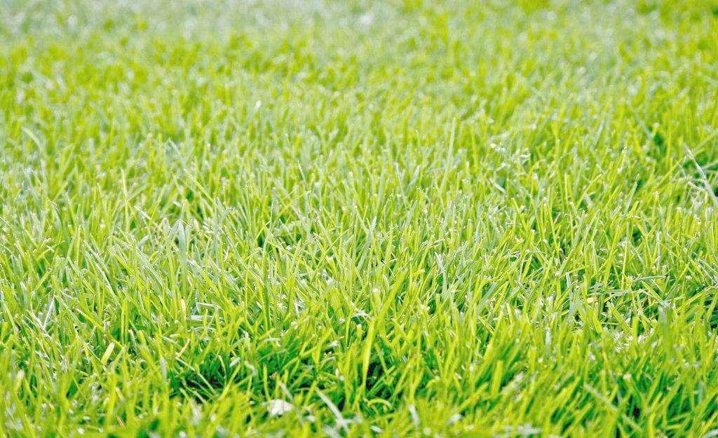 沈抚新区铁岭绿化草坪-想要品质好的草坪就来铁岭绿之缘苗木草坪