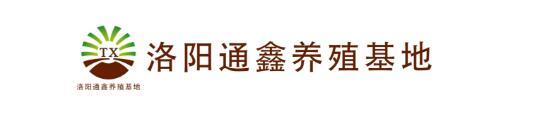 洛阳通鑫黄粉虫养殖基地