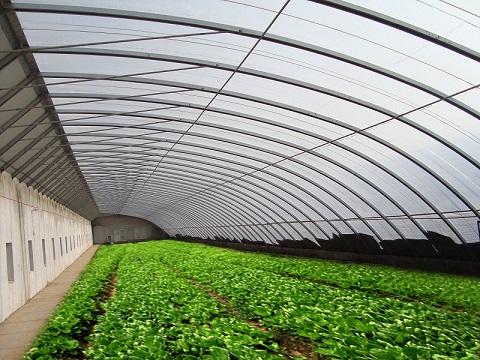 山东花卉温室大棚建造――[一辰温室工程]花卉温室大棚设计建造