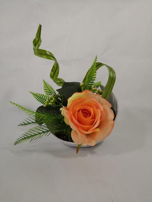 月牙盆玫瑰盆栽