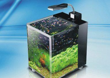 珊瑚亚克力水族工程提供有口碑的亚克力鱼缸_安徽观赏鱼缸厂家推荐