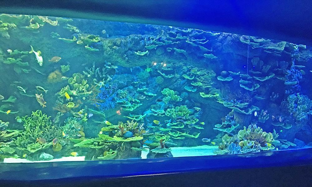 厂家生产扇形异性鱼缸水族箱创意亚克力水族箱亚克力水族箱