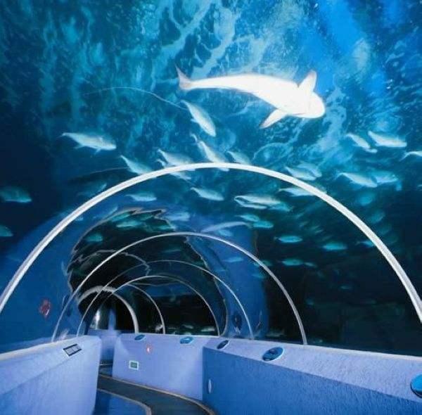 厂家热销亚克力大型鱼缸亚克力圆柱鱼缸支持定制