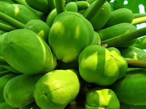 桥东蔬菜配送 服务好的蔬菜配送公司