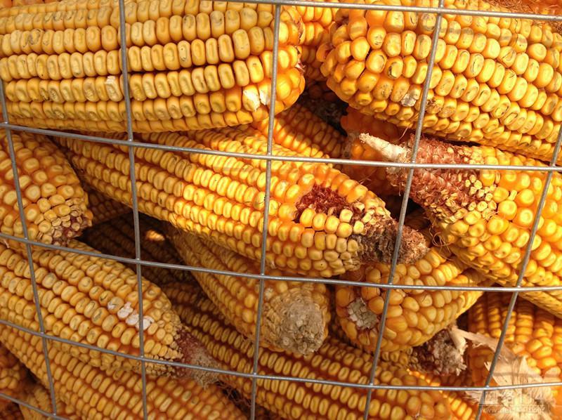 衡水好用的圈玉米网哪里买_新式的圈玉米网