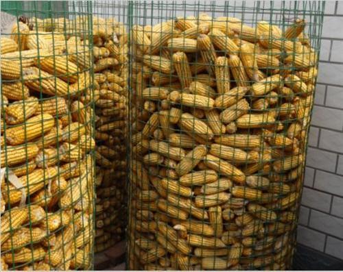 信誉好的圈玉米网厂商推荐-哪里找优质的圈玉米网