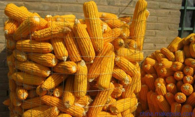 优质的圈玉米网-买优惠的圈玉米网当然是到鸿喆丝网了