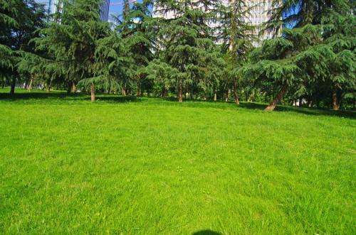 环保专用网-想要优良的环保草坪就来沈阳先锋网业