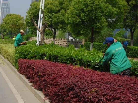 莲花县富明园艺场口碑好的江西生态农业小程序花卉供应,花卉租摆绿植租摆养护价格行情
